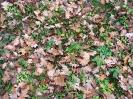 Zabełcze w jesiennym obiektywie